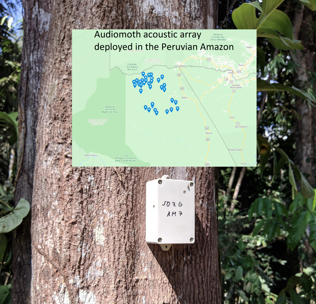 Aidomoth Acoustic Array deployment sites in the Peruvian Amazon